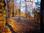 Image for Castlewood State Park Trail Running