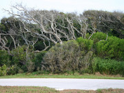 Image for Guana River State Park
