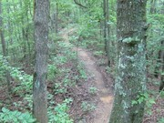 Image for Chubb Trail Trail Running