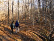 Image for Umstead State Park: Sycamore Trail