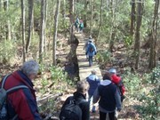 Image for Croatan National Forest: Neusiok Trail