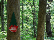 Image for Clemmons Educational State Forest