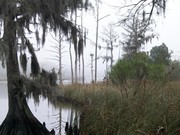 Image for Goose Creek State Park