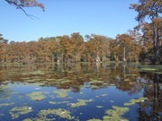 Image for Merchants Millpond State Park