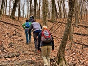 Image for Mossy Ridge Trail at Percy Warner Park