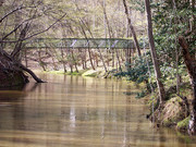 Image for Umstead State Park: 20 miles of singletrack trail
