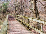 Image for Radnor Lake State Natural Area