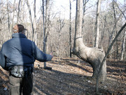 Image for Pigeon Roost Trail