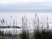 Image for Oak Island/Folly River