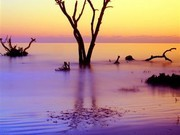 Image for Hunting Island State Park