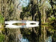 Image for Magnolia Plantation