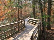 Image for Congaree National Park