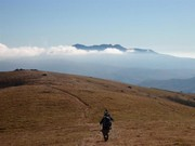 Image for Roan Mountain Backpacking